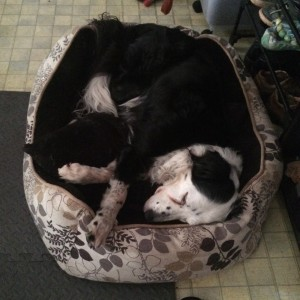 Patchy curled up in her bed