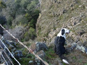 Patchy ~2008, looking over the edge of a steep cliff.  No fear